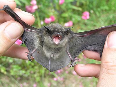 Bat Removal Atlanta Ga Guano Insulation Removal
